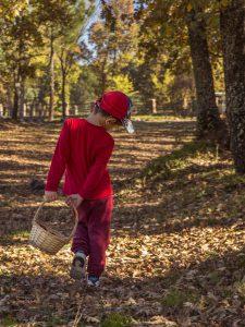 La magia de los bosques en otoño