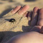 maneli-escarabajo-sientehuelva