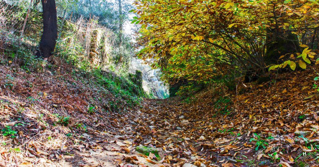rutas-senderismo-huelvaturismo-blog