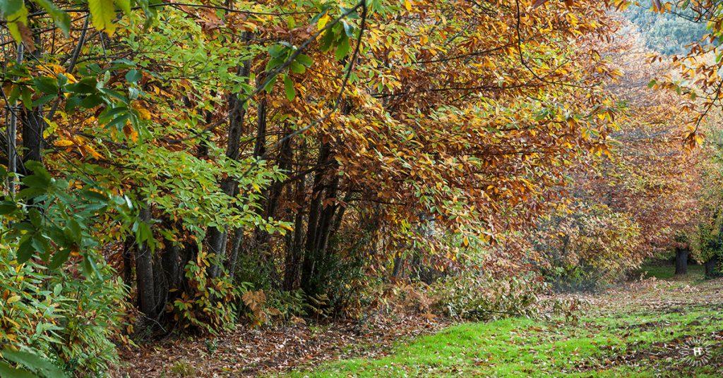 otoño-huelvaturismo-fb